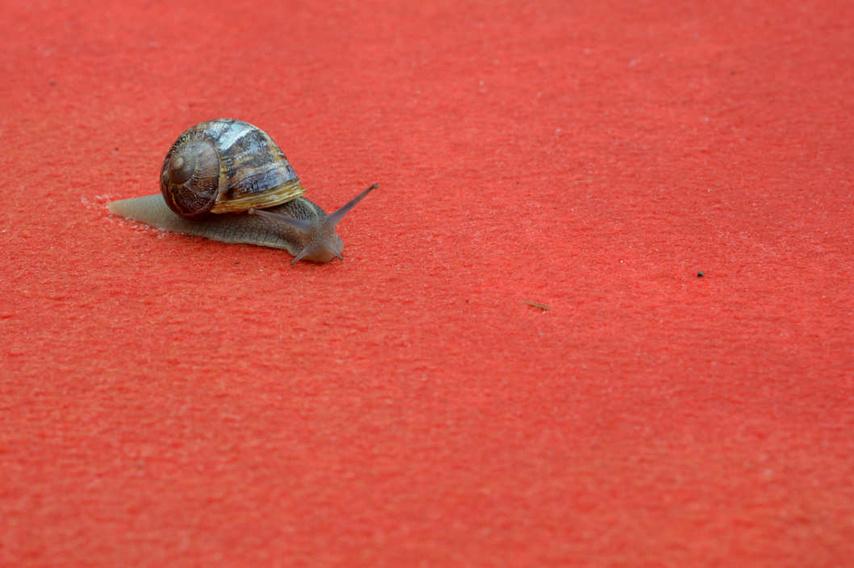22_snail-cannes-144938048.w529.h352.2x