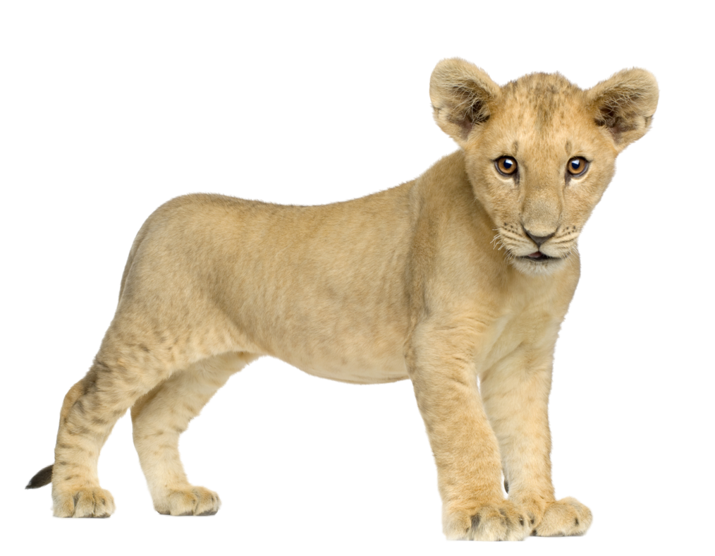 lion_PNG557